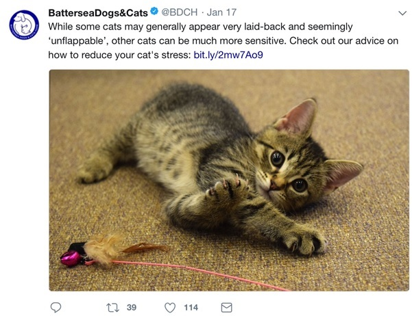 Battersea Dogs and Cats tweet