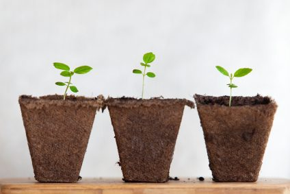 Three plant posts containing seedlings