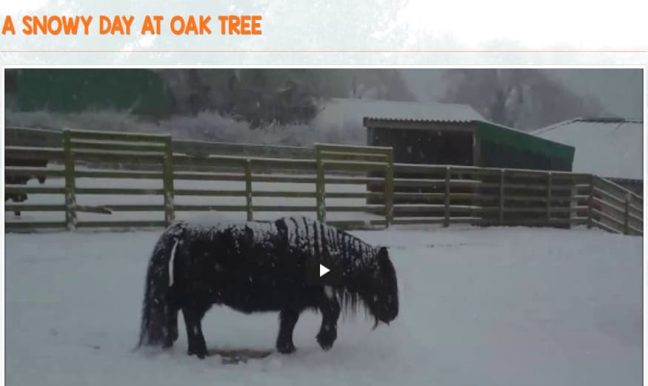 Oak Tree Animals
