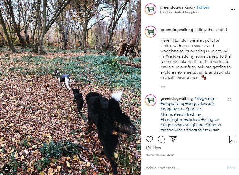 Green Dog Walking Instagram post