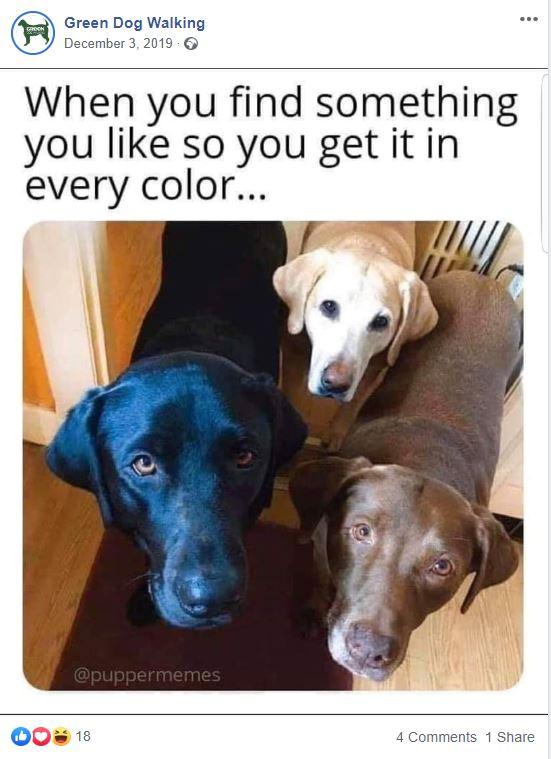 Green Dog Walking Facebook post