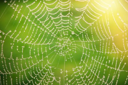 spider web with droplets of water on it